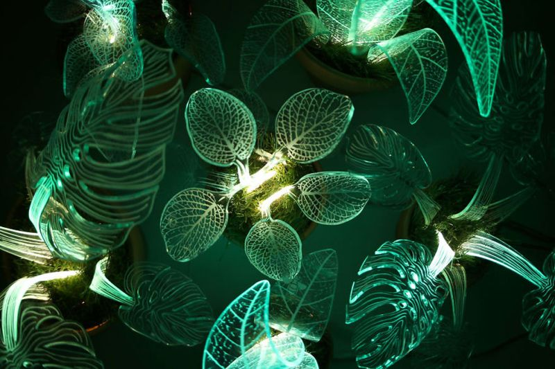 glow-in-the-dark plants-3