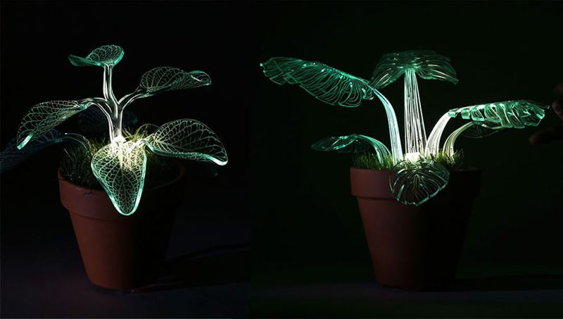 glow-in-the-dark plants-4