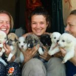Peepal Farm recovers injured stray or abandoned animals in Dharamsala
