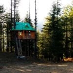 Whimsical treehouse in Shimla resembles something out of a fairy tale