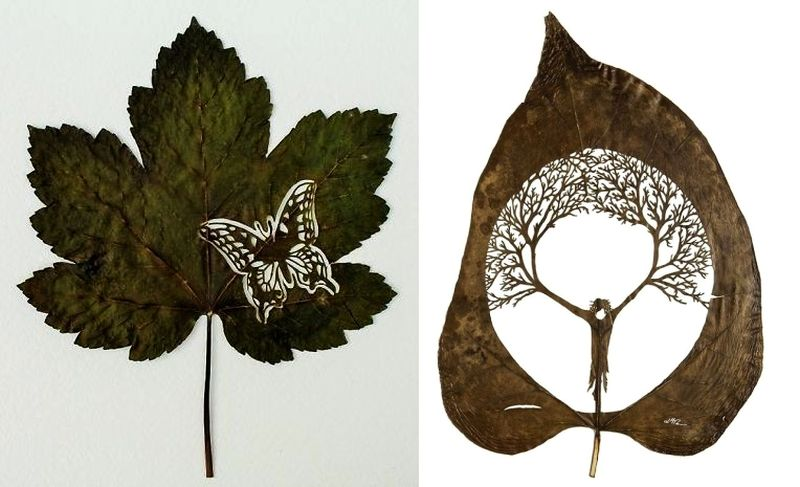 Leaf Art: Artist creates intriguing artwork on fallen leaves