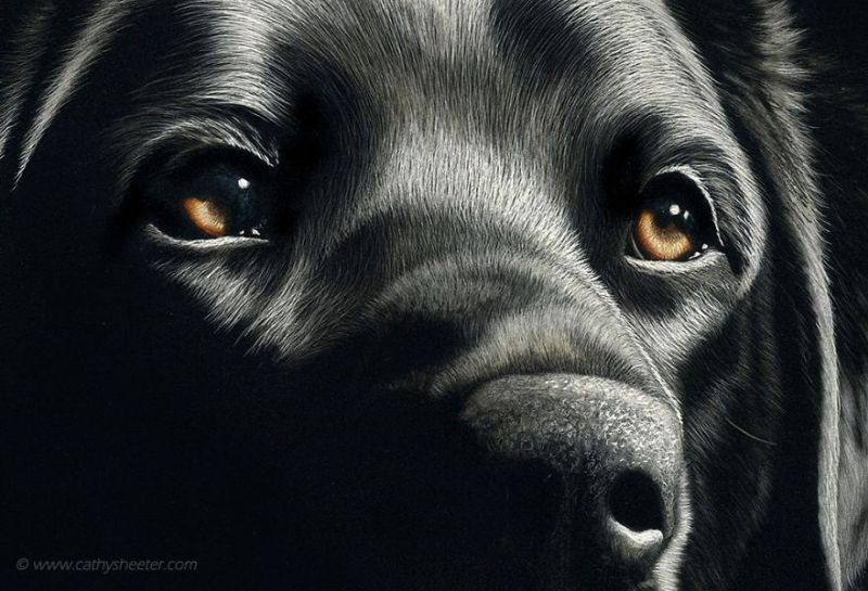 Hyper-realistic scratchboard Art by cathy sheeter