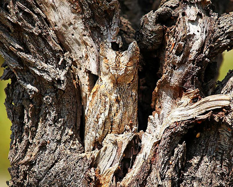 Animal Camouflage: Can you spot hidden animals in these photographs?
